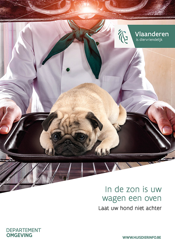 affiche hond in de oven